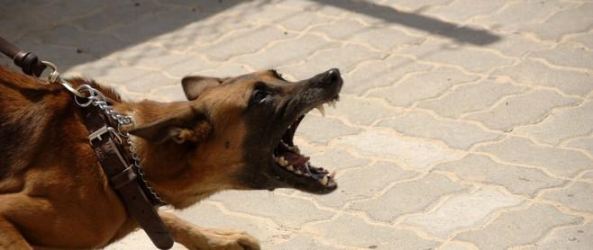 dog attack bite 658x278 1